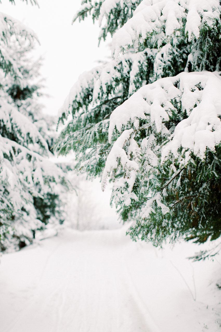 Bright white Christmas